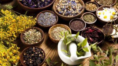 طب سنتی در بوشهر