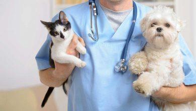 تصویر در بهترین کلینیک های دامپزشکی در بوشهر -آدرس و تلفن